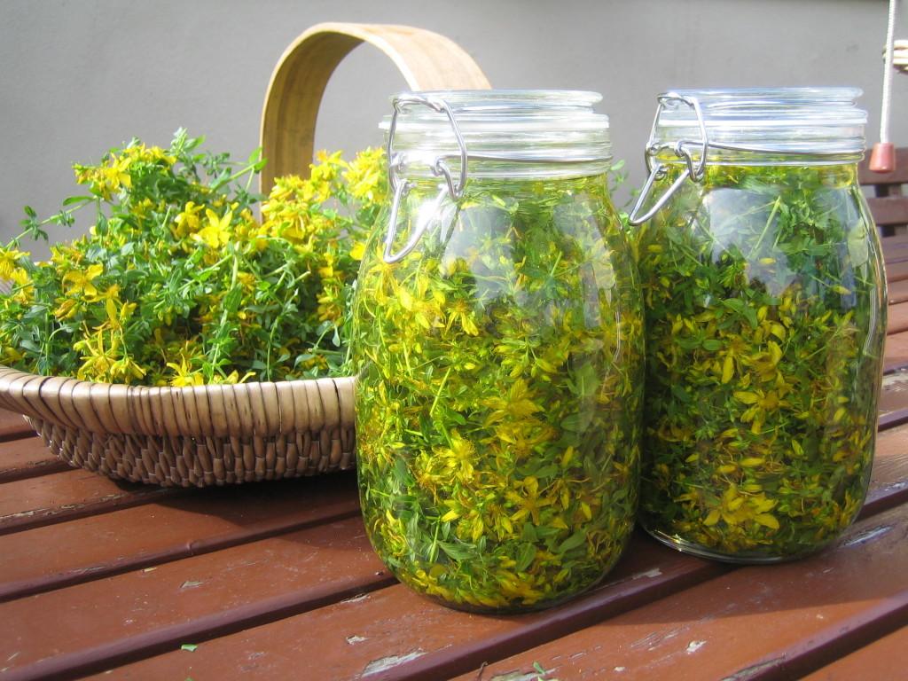 Полезные свойства травы зверобоя