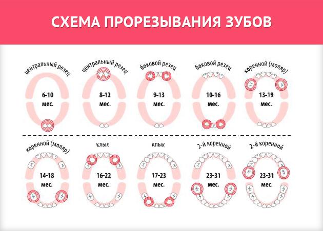 prorezyvaniya-zubov-u-grudnichkov