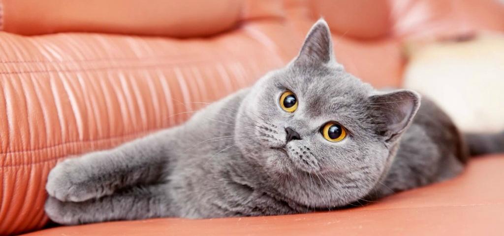 Как правильно применять противопаразитарные средства для своей кошки