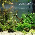 Какие помпы в аквариум стоит выбирать?